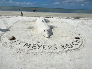 Fort Myers Beach whale